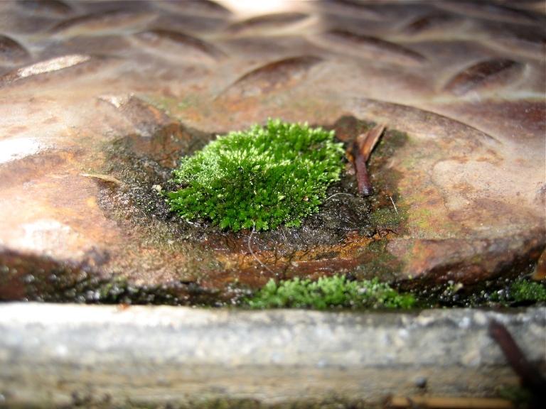 Civic Moss