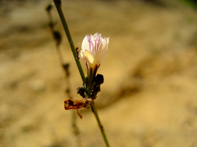 Ant And Weed Flower
