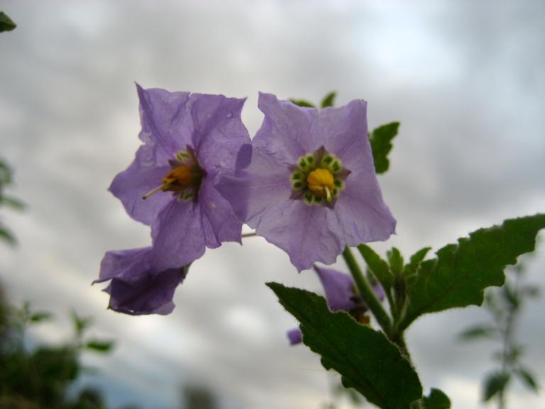 Kite Flowers