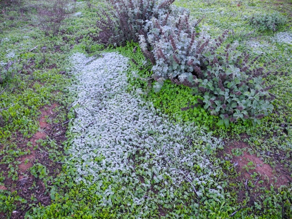 The Inviting Bed Of Weeds