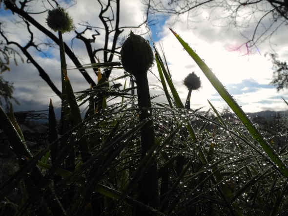 Onions And Grasses