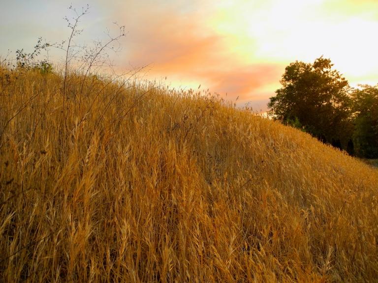 Smokey Sunset Over Weeds