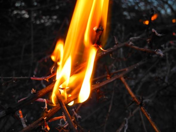 Tumbleweed Flare