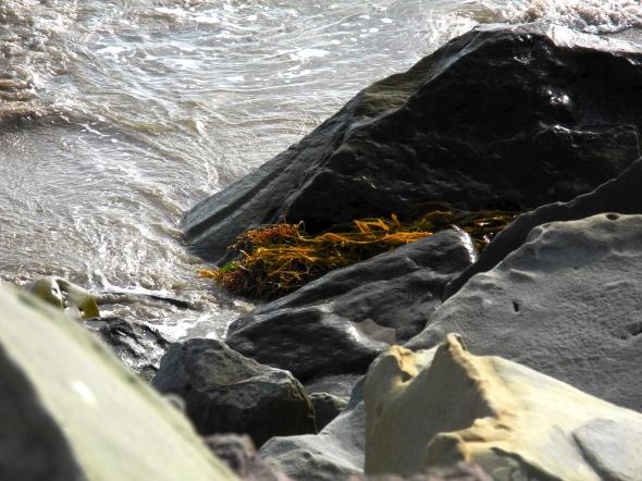 Ventura Swells