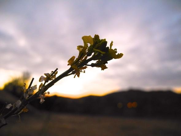 Mustard's Sky