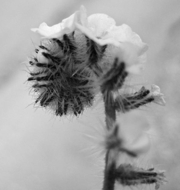 Fragile Memory