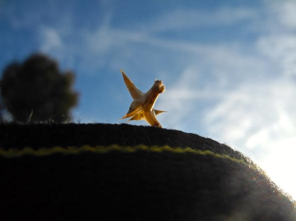 Tumbleweed Seed