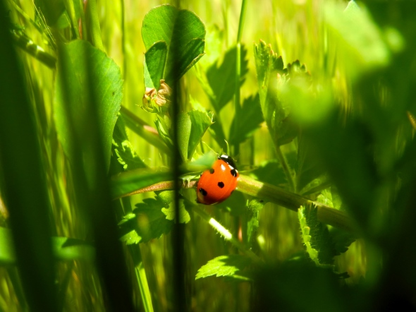 Our First Ladybird