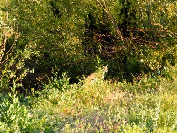 Wild In The Weeds