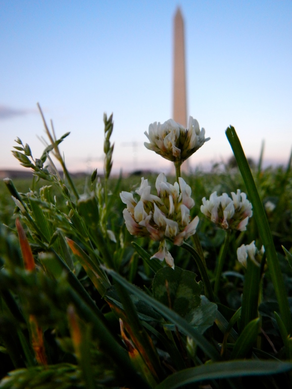 Clover at The Washington Monument